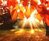 Fall-Nature-HD-Wallpaper-2